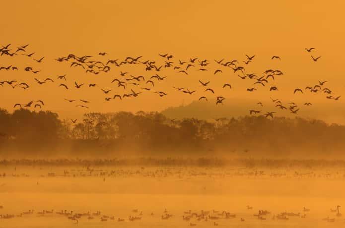 早朝の伊豆沼