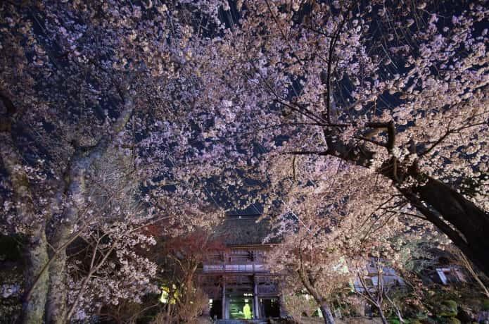 気仙沼 宝鏡寺 桜