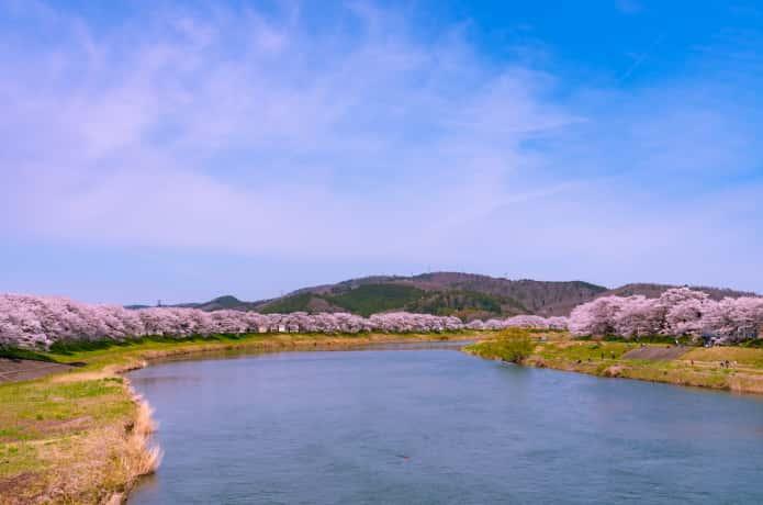 末広歩道橋からみる白石川堤千本桜