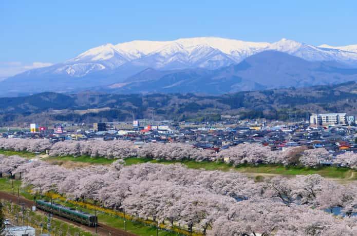 白石川堤一目千本桜と残雪の蔵王連峰