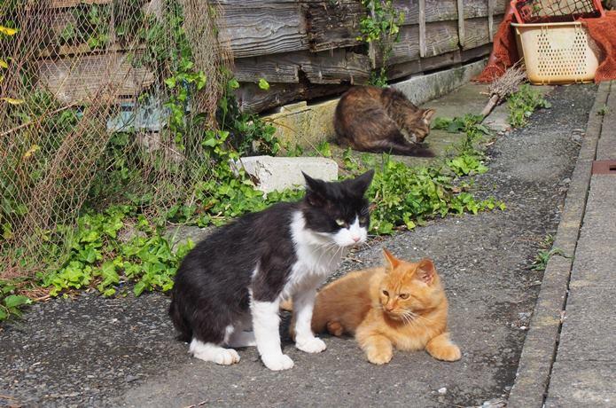 田代島 集落の路地にいた猫