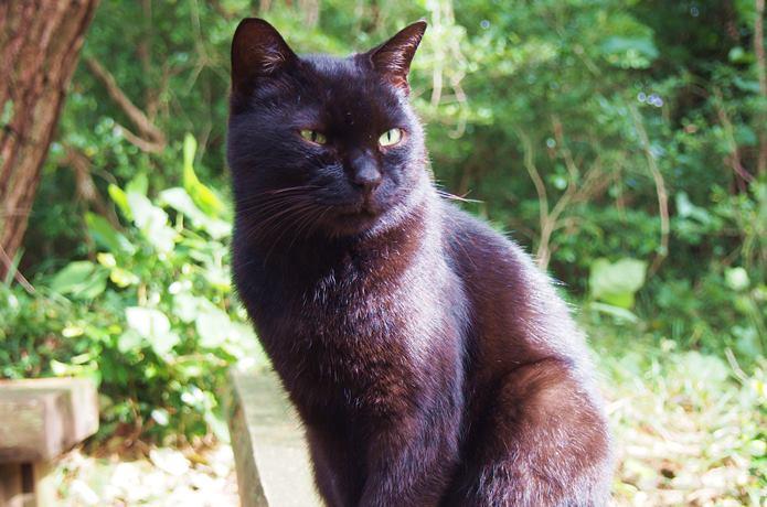 猫神社にいた猫