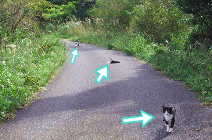 田代島 道路に座る猫
