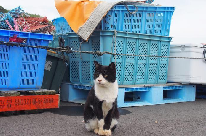 仁斗田港に居座る猫