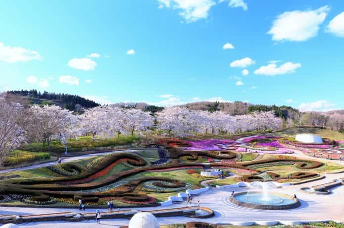国営みちのく公園 桜
