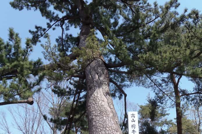 仙台 瞑想の松