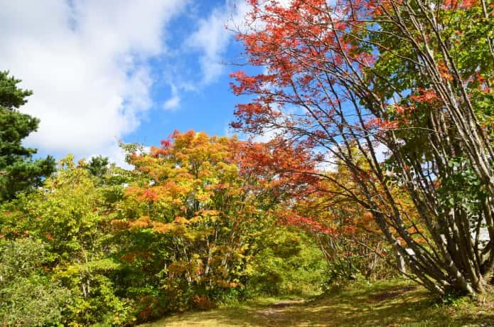 蔵王坊平高原と紅葉