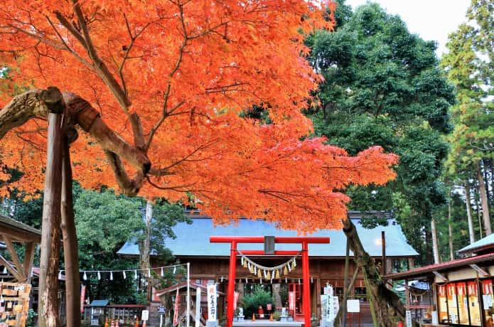 賀茂神社の境内