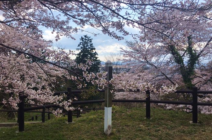 松森城と桜