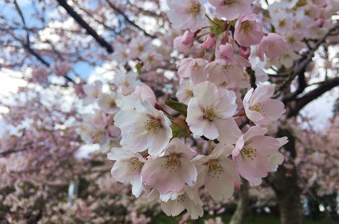 春の松森城