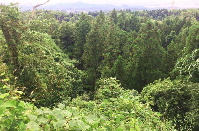 岩城城周囲の森