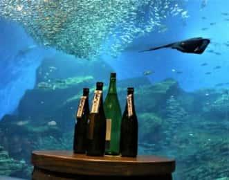 仙台うみの杜水族館と日本酒