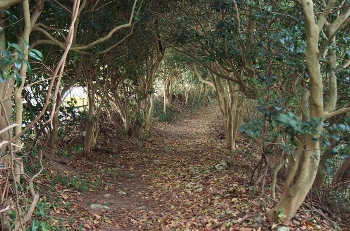 桂志麻椿のトンネル