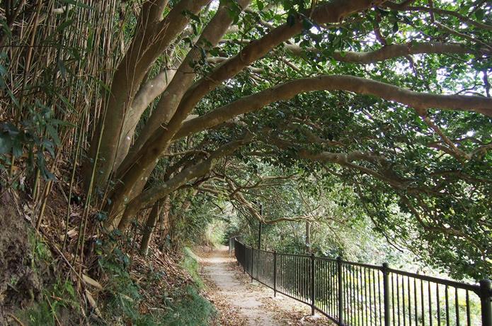 椿のトンネル