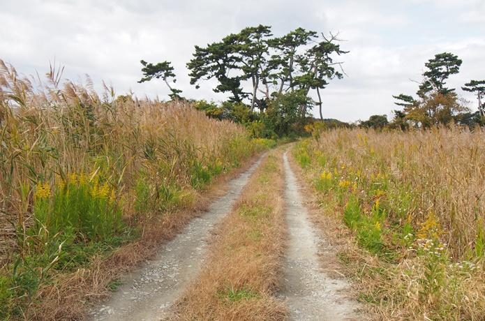 田園地帯の道
