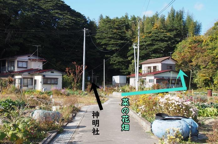 朴島 集落