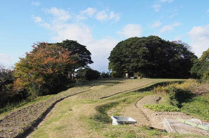 朴島 菜の花畑