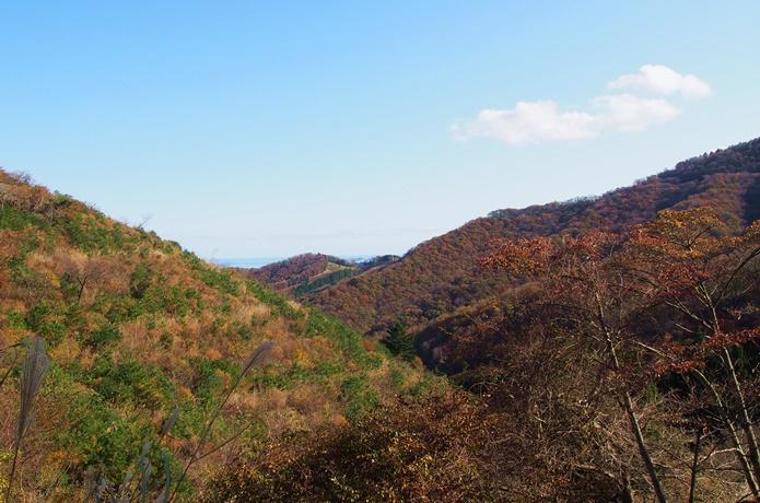 コバルトライン 山の中の景色